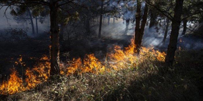 Yine orman yangını: Edirne Meriç yanıyor