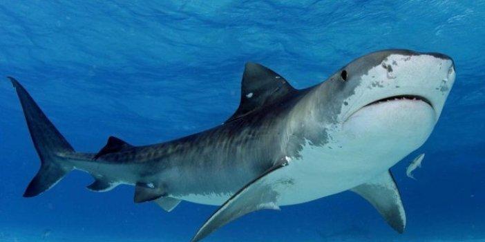 Kadın yüzücüyü köpek balığı öldürdü