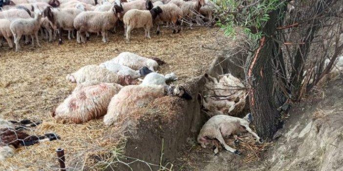 Düşen yıldırım 40 koyunu telef etti