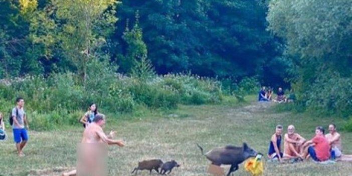Domuz sürüsü çıplaklar kampını bastı: Çırılçıplak bilgisayarını çalan domuzu peşine düştü