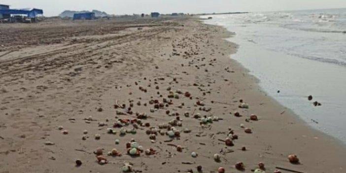 Yüzlercesi sahile vurdu! Görenlerin gözleri fal taşı gibi açıldı