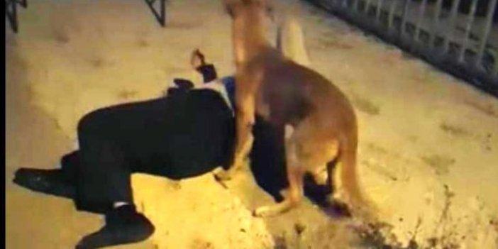 Kaybolan köpek sahibini görünce neler yaptı neler