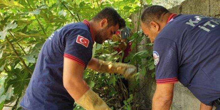 Kaplumbağaları kurtarma operasyonu