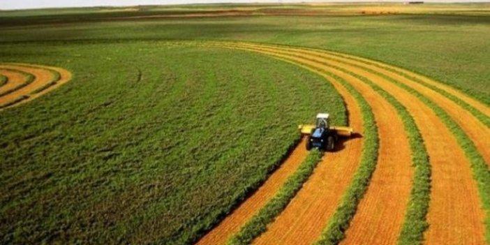 Ünlü tarım yazarı açıkladı: İç savaştaki Suriye ve Yunanistan'dan bakın ne ithal ediyoruz!