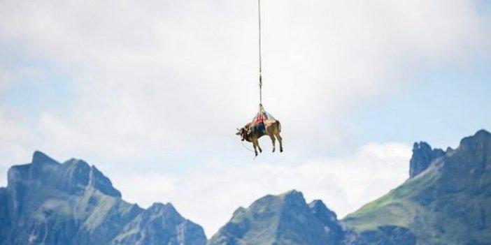 Yaralı ineği için helikopter kaldırdı! Yaşasın iyi insanlar, Kahrolsun kötü insanlar