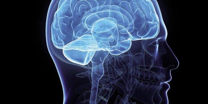 Bilim insanları çılgın aleti açıkladılar: Beyinleri birleştirmeyi başardılar