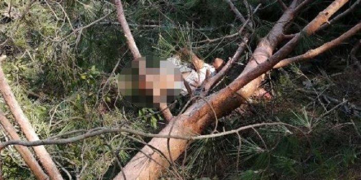 Talihsizliğin böylesi: Kestiği ağacın altında kaldı
