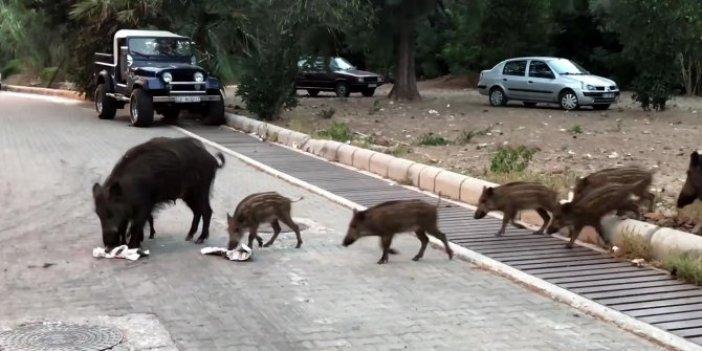 Yavrularını yanına aldı, Marmaris merkeze indi