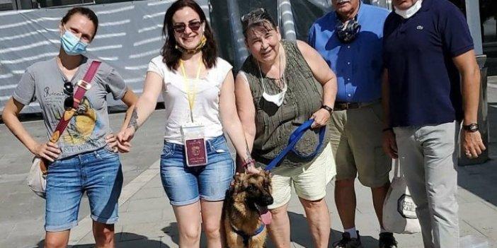 Sopayla dövülen köpeğe, İtalyan aile sahip çıktı