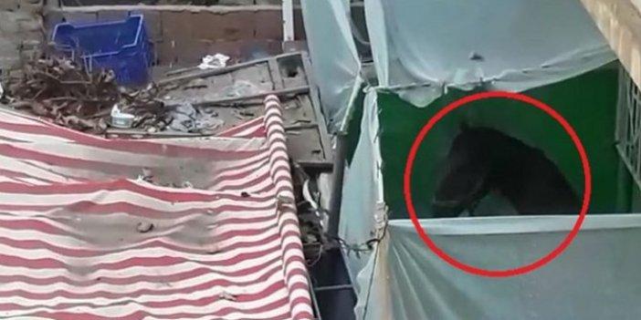 Bursa'da tepki çeken görüntü: Balkonda atı görenler şaşkına döndü
