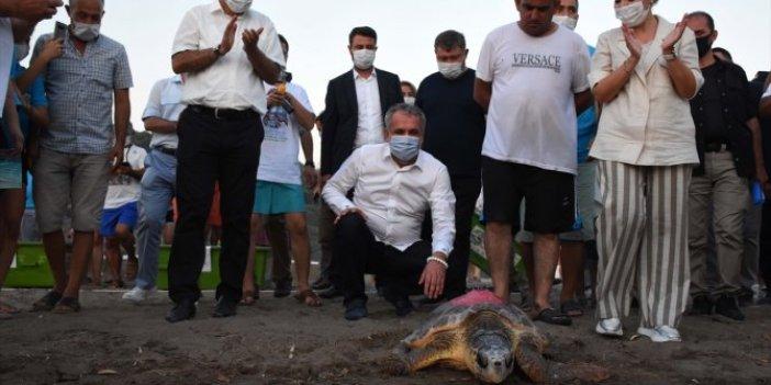 Muğla'da 4 caretta caretta tedavi edildi! 25 yavru denizle buluştu