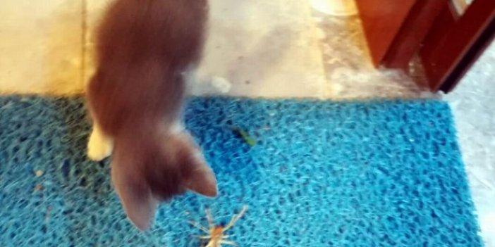 Öldürücü pati darbelerinden böyle kurtuldu! Et yiyen örümcek ile kedi kapıştı! Nefesleri kesen mücadele