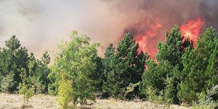 Çorum'da orman yangınına müdahale eden 3 kişi yaralandı