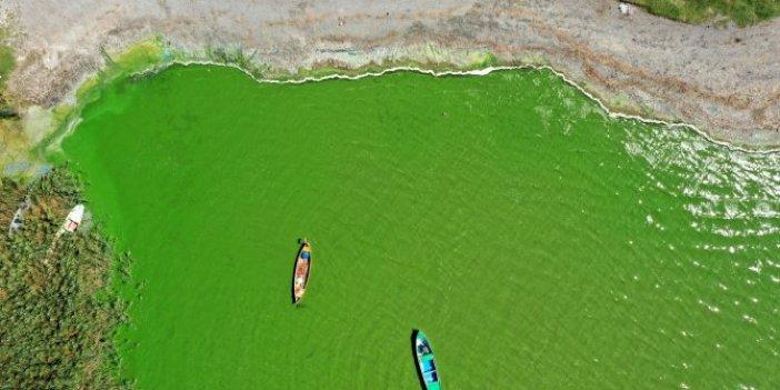 """Bu gölün balığı zehir saçıyor"""" Görenler korkuya kapılıyor! Uluabat Gölü yemyeşil"""