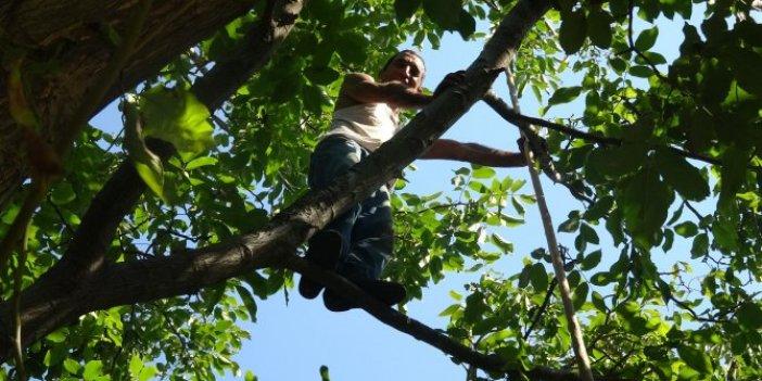 Tarzan Hamdi ağaca tırmanıp günde 300 TL kazanıyor