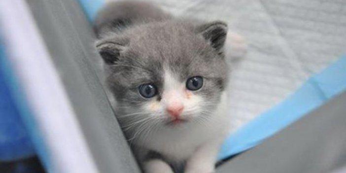 Beşiktaş Belediyesi'nden, hayvanseverleri sevindiren adım