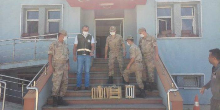 Erzurum'da kınalı keklik avlayan avcılar suçüstü yakalandı!