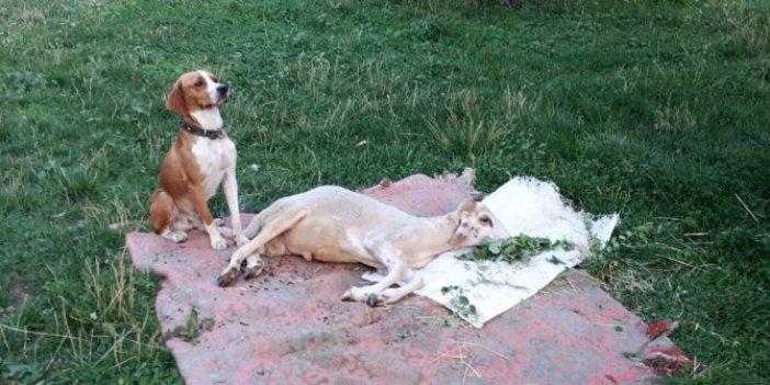 Köpekle kuzunun dostluğu! Aralarından su sızmıyor! Görenler şaşırıyor