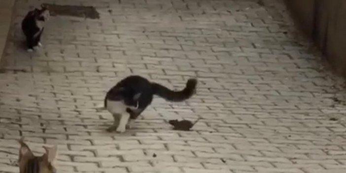 Tek hamlesiyle 5 kediyi yere serdi! Bu sefer dengeler değişti