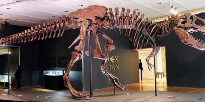 Sahibinden satılık dinozor iskeleti! 67 milyon yaşında, 12 metre boyunda