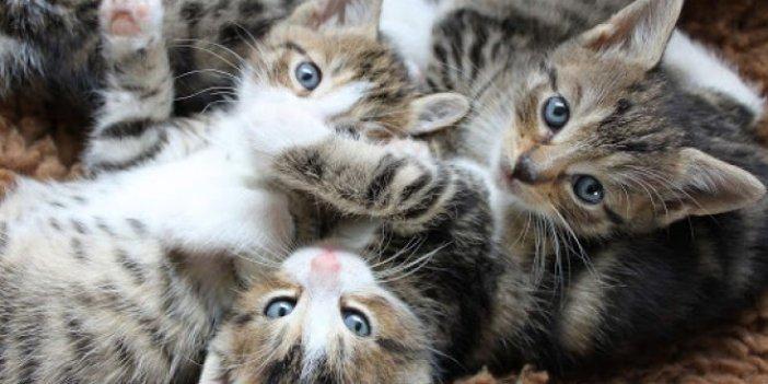 Bu kadar kediyi bir eve nasıl sığdırdın. Saymakla bitiremediler