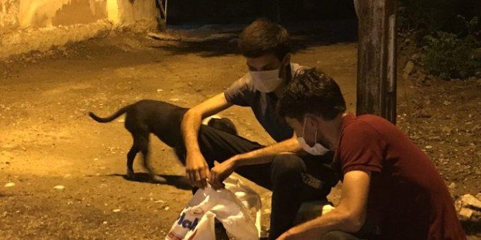 """Adana'da iş yerine giren hırsızları """"Zümrüt"""" yakaladı"""