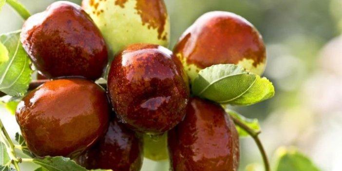 Bu meyveyi yiyenin karnı acıkmıyor. Stres, kabızlık, uykusuzluğa da birebir