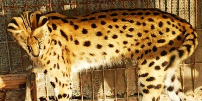 'Mini hayvanat bahçesine' şok baskın! O kadar hayvanı yurt dışından kaçak getirmiş