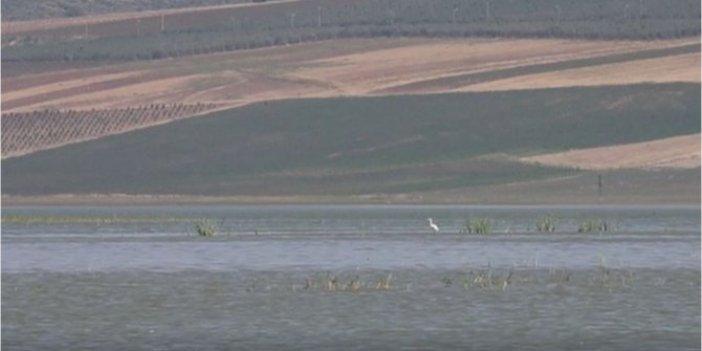 Reyhanlı barajında 14 yeni kuş türü keşfedildi