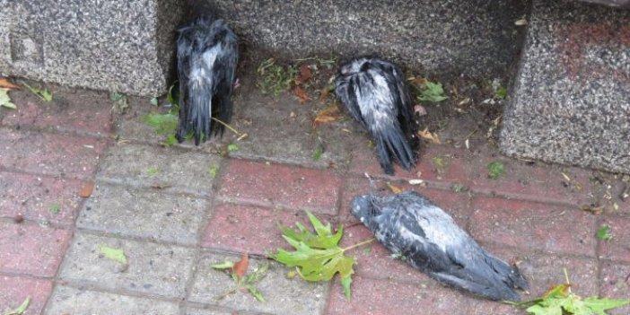 İstanbul'u dolu vurdu, olan yine bu canlara oldu