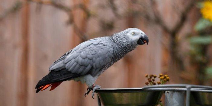 Küfürbaz papağana sürgün