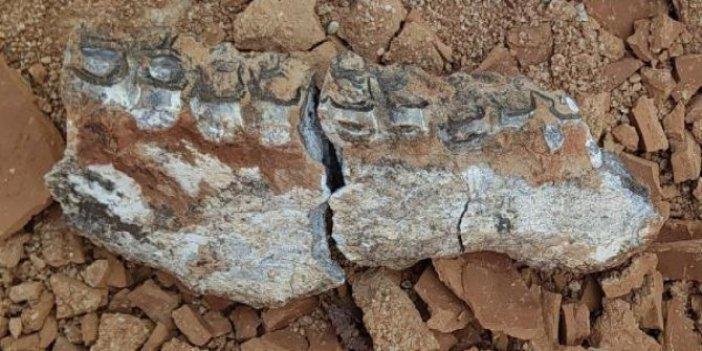 Toprağı kazdıkça altından çıktı. Araştırmacıları heyecanlandıran buluş. O ilimizde 9 milyon yıllık fosiller bulundu