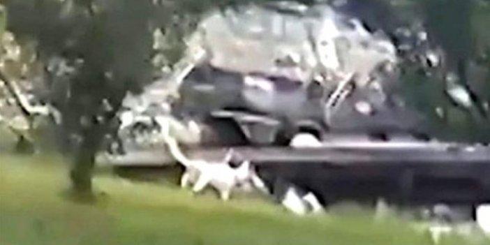 Göle yaklaşan çoban köpeği timsaha yem oldu. Lüks villadaki dehşet anları kamerada
