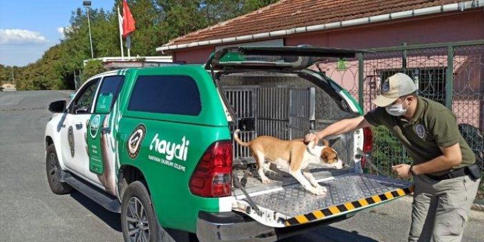 Köpeğe şiddet uyguladı cezası bu oldu