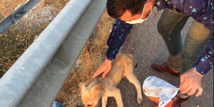 Çöp yerine sokağa atıldı, köpeğin kafası sıkıştı