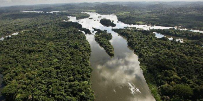Amazon Ormanları'nı bekleyen büyük tehlike. Yüzlerce canlı yok olmanın eşiğinde