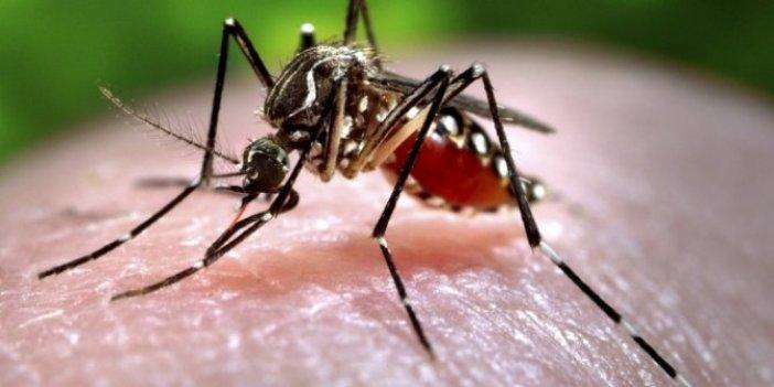 Belirtileri korona ile aynı. Chikungunya için kırmızı alarm. Hızla yayılıyor