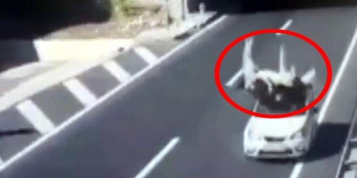 600 kiloluk inek aracın üstüne düştü. Kahramanmaraş'ta akıl almaz kaza