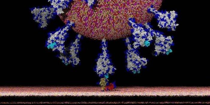 ABD'li ve Çin'li bilim insanları başardı... Korona virüsün hücrelere sızması saniye saniye görüntülendi