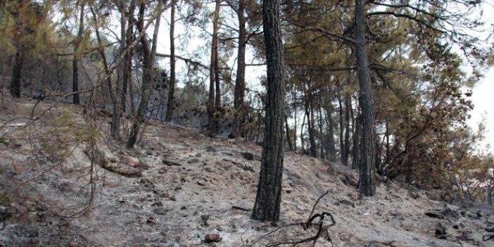 Mersin'deki orman yangını kontrol altında
