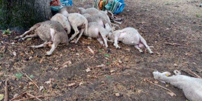 Yağmurdan kaçan koyunlar çırpına çırpına can verdi. Köylülerin ağıt sesleri ortalığı inletti