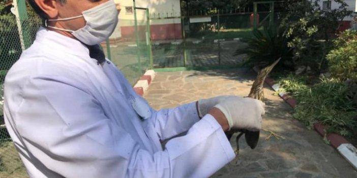Balaban kuşu cezaevine sığındı
