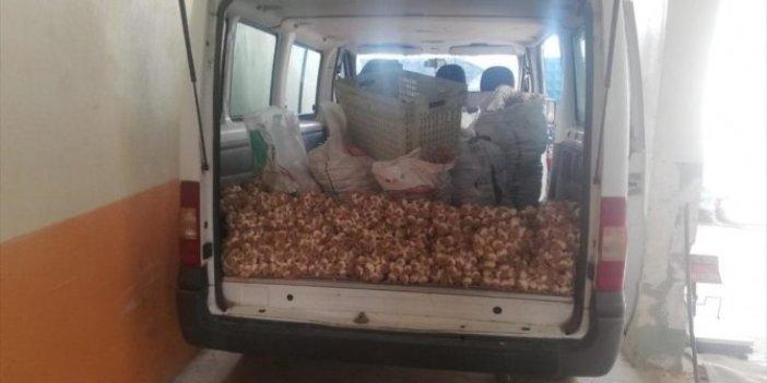 Sarımsağın 315 kilosunu 3 bin 600 liraya sattılar