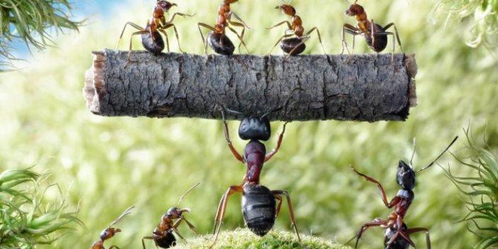 İşte karınca teorisi. Dünyadaki her şeyi açıklıyor. 100 kırmızı karınca 100 de siyah karınca alın koyun aynı kavanoza koyun. Sonucuna sizde inanamayacaksınız