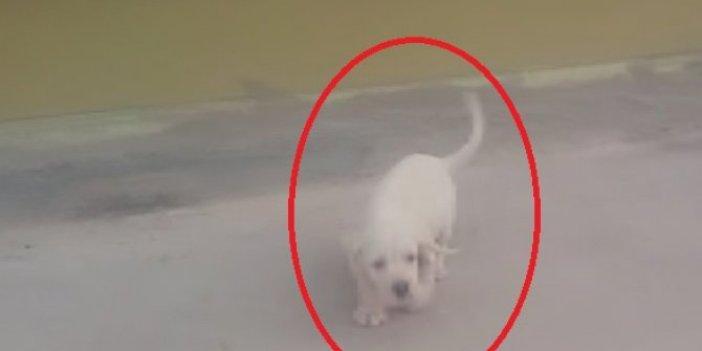 Sevdiği köpeği kaçırdı. Polis peşine düştü. O anlar kamerada