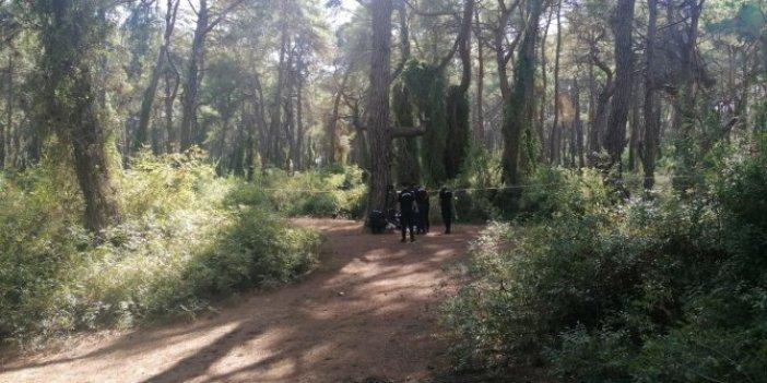 Antalya'da atla gezen turist büyük şok yaşadı. Ağaçta fark edince çığlığı bastı