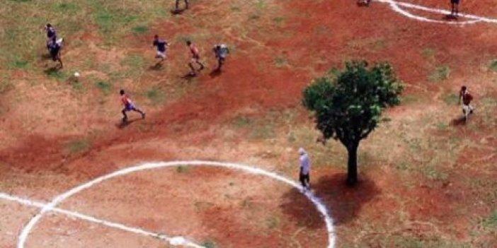 Ağaç kesen, ağaç yakan katiller! Bu çocuklardan utanın. Yaradan bu dünyayı sadece insanoğlu için yaratmadı. Yaşasın iyi insanlar Kahrolsun kötü insanlar