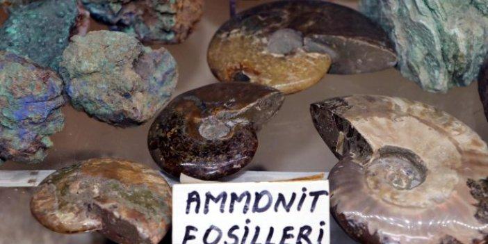 Trilobitler tam 550 milyon yıl öncesine ait. Kolye yapmak için dağ tepe dolaşırken buldu
