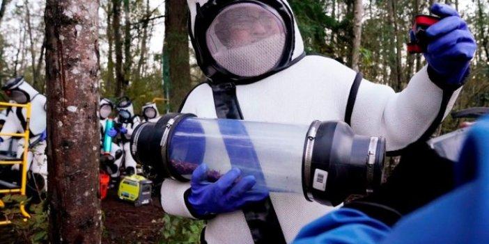ABD'de katil eşek arılarına nefes kesen operasyon. Kanat açıklığı 7 santimetre, her yıl 50 insanı öldürüyorlar