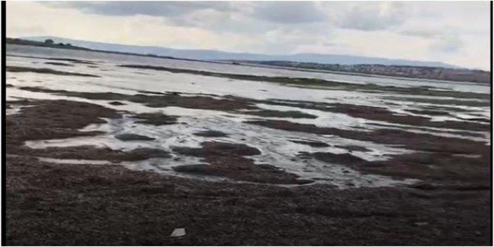 Seferihisar'da sular önce çekildi, sonra kabararak geri döndü: Balıklar karada çırpınıyordu